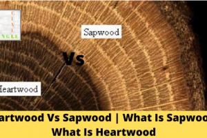 Heartwood Vs Sapwood